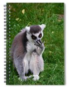 Ring-tailed Lemur Spiral Notebook