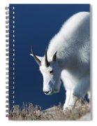 Rocky Mountain Goat Spiral Notebook