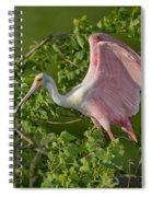 Roseate Spoonbill Spiral Notebook