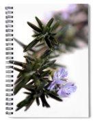 Rosemary Spiral Notebook