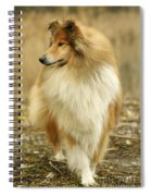 Rough Collie Dog Spiral Notebook