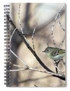 Ruby-crowned Kinglet Spiral Notebook