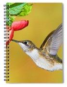 Ruby-throated Hummingbird Female Spiral Notebook