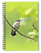 Ruby-throated Hummingbird - Immature Female - Archilochus Colubris  Spiral Notebook
