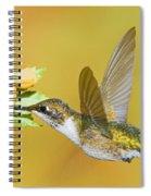 Ruby Throated Hummingbird Spiral Notebook