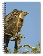 Rueppells Vulture Spiral Notebook
