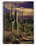 Saguaro Cactuses In Saguaro National Park Spiral Notebook