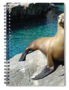 Salty Spiral Notebook