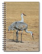 Sand Hill Cranes Eating Spiral Notebook