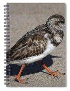 Ruddy Turnstone On The Beach Spiral Notebook