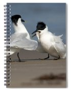Sandwich Tern Bringing Fish To Its Mate Spiral Notebook