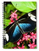 Sara Longwing Butterfly Spiral Notebook