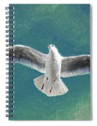 10427 Seagull In Flight Spiral Notebook