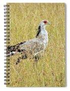 Secretary Bird Spiral Notebook