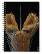 Sem Of Stable Fly Foot Spiral Notebook