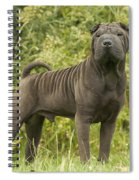 Shar Pei Dog Spiral Notebook
