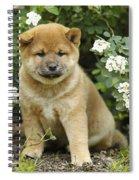 Shiba Inu Puppy Dog Spiral Notebook