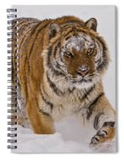 Siberian Tiger In Snow Spiral Notebook