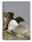 Sitting Dovekie Spiral Notebook
