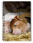Sleeping Hogs  Spiral Notebook