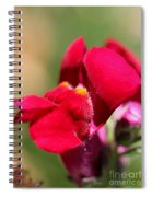 Snapdragon Named Red Chimes Spiral Notebook