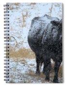 Snow Angus Spiral Notebook