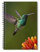 Snowy-bellied Hummingbird Spiral Notebook