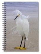 Snowy Egret At The Beach Spiral Notebook