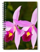 Sophronitis Orchid Spiral Notebook