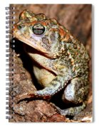Southern Toad Bufo Terrestris Spiral Notebook