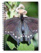 Spicebush Swallowtail Papilio Troilus Spiral Notebook