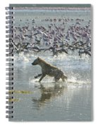 Spotted Hyaena Hunting For Food Spiral Notebook