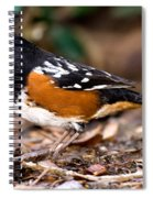 Spotted Towhee Pipilo Maculatus Spiral Notebook