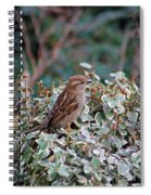 Spring Beauty Spiral Notebook