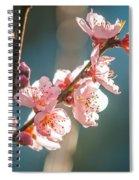 Spring Peach Tree Blossom Spiral Notebook