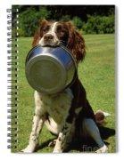 Springer Spaniel Dog Spiral Notebook