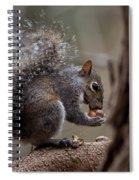 Squirrel II Spiral Notebook