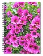 Stareye  Spiral Notebook