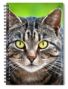 Stray Cat Stare Spiral Notebook