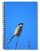 The Lookout Shrike Or Butcher Bird Art Spiral Notebook