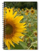 Sun Flower Fields Spiral Notebook