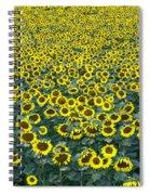 Sunflower Nirvana 13 Spiral Notebook