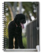 Sunny Obama Spiral Notebook