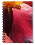 Tall Bearded Iris Named Ancient Echoes Spiral Notebook