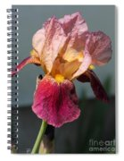 Tall Bearded Iris Named Indian Chief Spiral Notebook