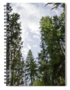 Tall Spruce Trees Spiral Notebook