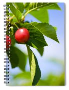 Tart Cherries Spiral Notebook