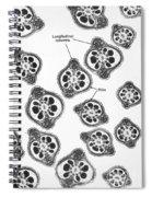 Tem Of Chinese Hamster Spermatozoa Spiral Notebook