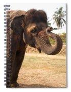 Temple Elephants Maharaja's Palace India Mysore Spiral Notebook