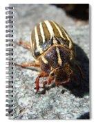 Ten Lined June Beetle Spiral Notebook
